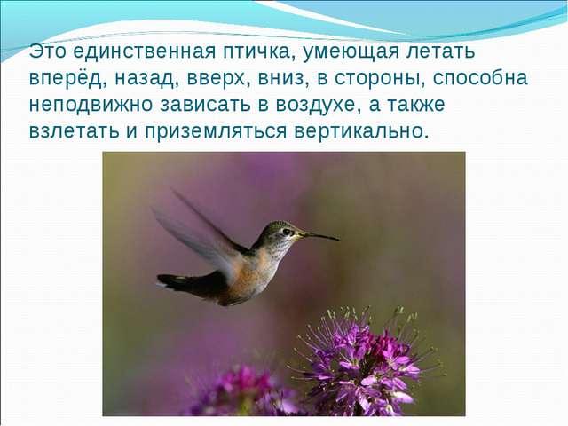 Это единственная птичка, умеющая летать вперёд, назад, вверх, вниз, в стороны...