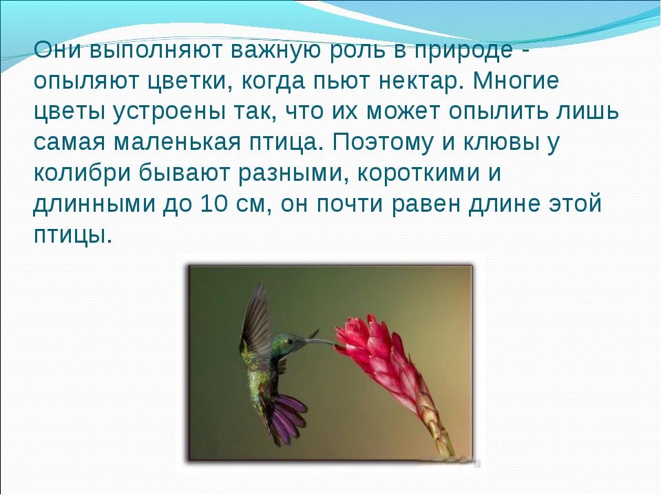 Они выполняют важную роль в природе - опыляют цветки, когда пьют нектар. Мног...
