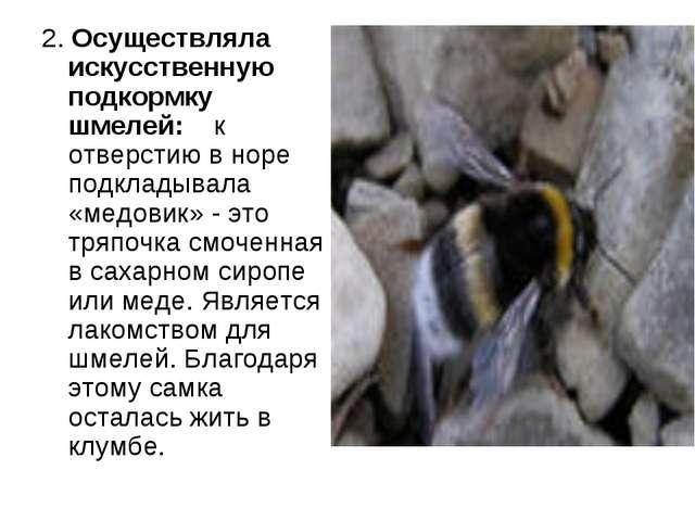 2. Осуществляла искусственную подкормку шмелей: к отверстию в норе подкладыва...