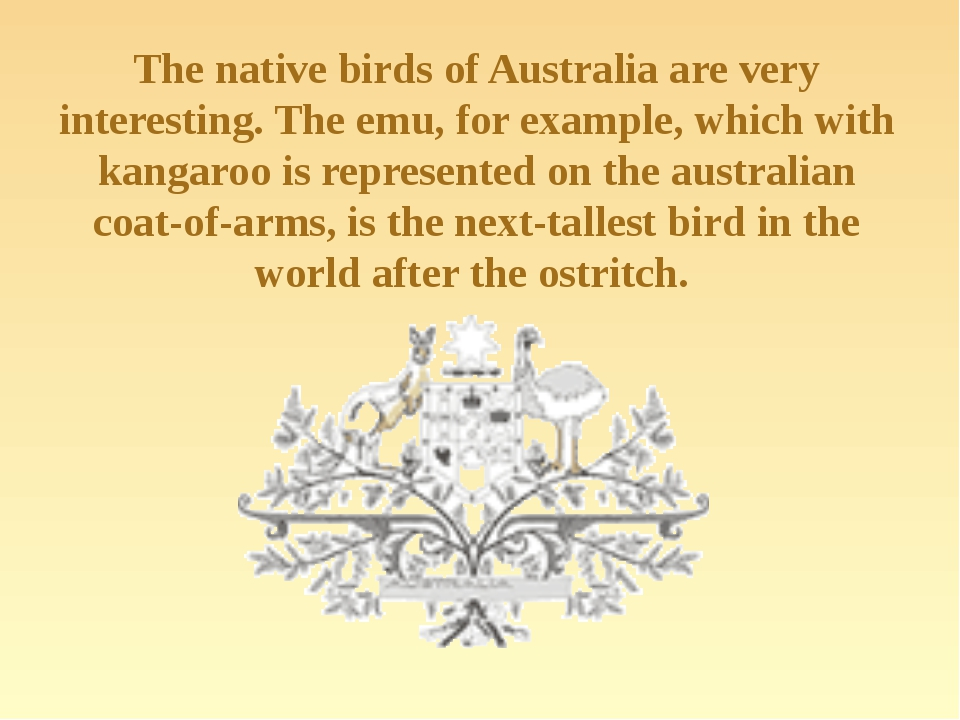 The native birds of Australia are very interesting. The emu, for example, whi...