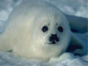 Животный мир? В Балтийском море обитают солоноватоводная раса атлантической с