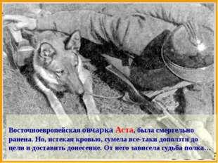 Собаки – связисты  Из донесения штаба Калининского фронта: «Шесть собак связ