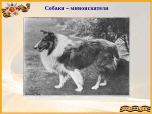 Собаки – миноискатели Дина Миноискатель – её вторая специальность. Ди