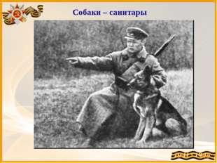 Собаки – санитары Они находили тяжело раненых солдат в болотах, лесах, овраг