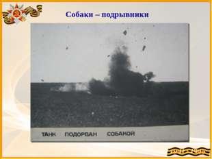 Собаки – подрывники Собаки-истребители танков – за время войны подорвали бол