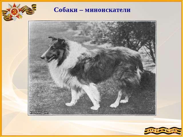 Собаки – миноискатели Дина Миноискатель – её вторая специальность. Ди...