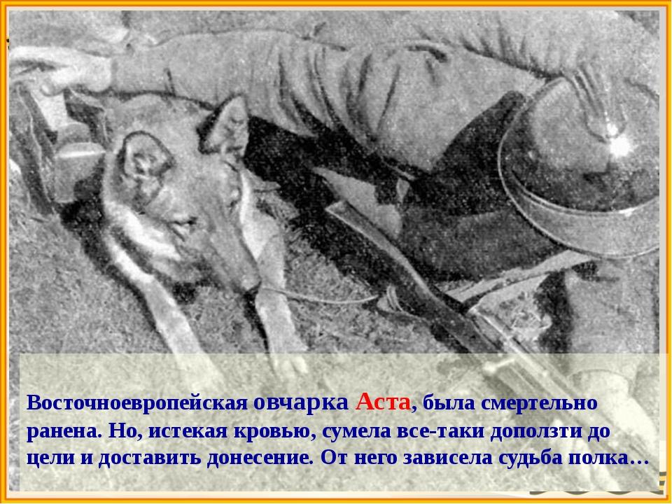 Собаки – связисты  Из донесения штаба Калининского фронта: «Шесть собак связ...