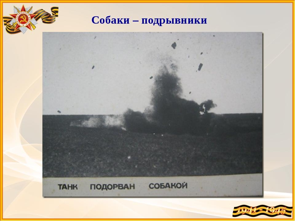 Собаки – подрывники Собаки-истребители танков – за время войны подорвали бол...