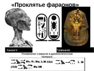 «Проклятье фараонов» Упоминание о вирусах в древнеегипетском папирусе Ramzes
