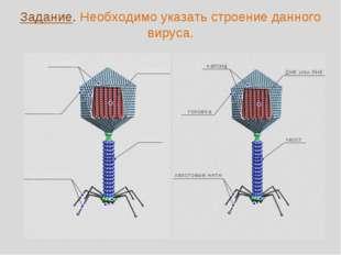 Задание. Необходимо указать строение данного вируса.