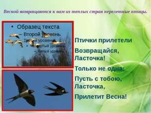 Весной возвращаются к нам из теплых стран перелетные птицы. Птички прилетели