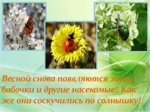 Весной снова появляются жуки, бабочки и другие насекомые! Как же они соскучил