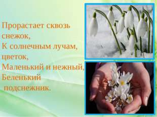 Прорастает сквозь снежок, К солнечным лучам, цветок, Маленький и нежный, Беле