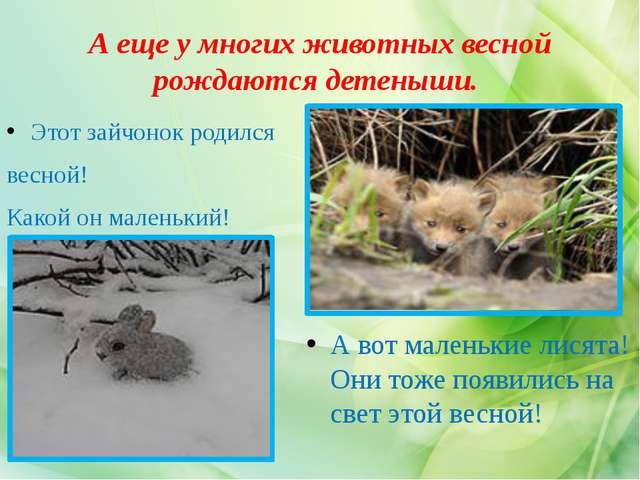 А еще у многих животных весной рождаются детеныши. Этот зайчонок родился весн...