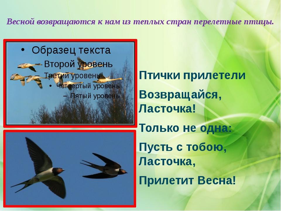 Весной возвращаются к нам из теплых стран перелетные птицы. Птички прилетели...