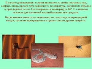 В начале дня ящерицы и жуки вылезают из своих песчаных нор, собрать пищу, пре
