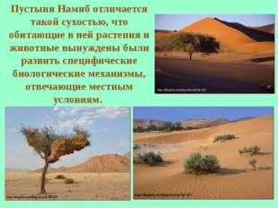 Пустыня Намиб отличается такой сухостью, что обитающие в ней растения и живот