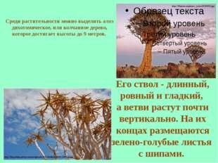 Среди растительности можно выделить алоэ дихотомическое, или колчанное дерево
