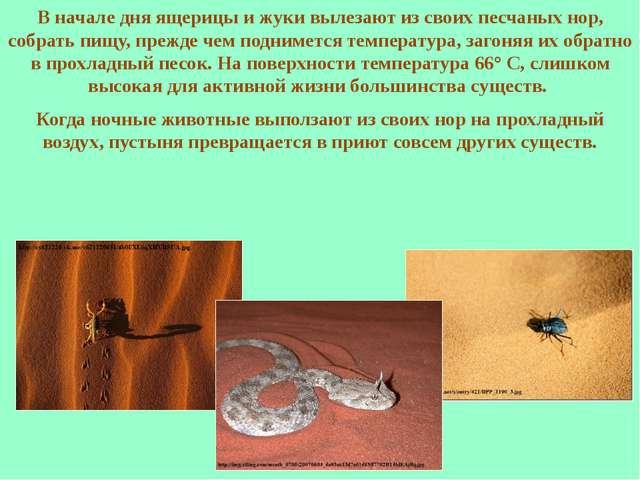 В начале дня ящерицы и жуки вылезают из своих песчаных нор, собрать пищу, пре...