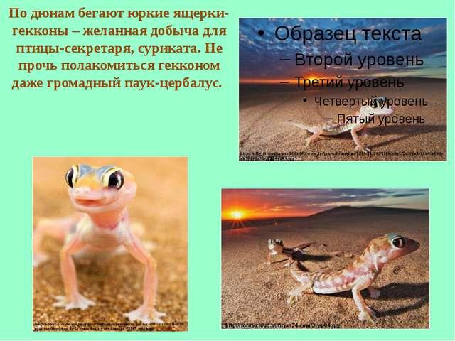 По дюнам бегают юркие ящерки-гекконы – желанная добыча для птицы-секретаря, с...