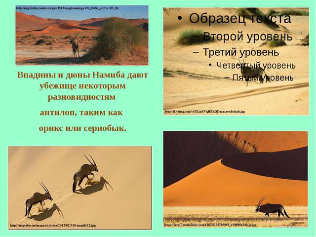 Впадины и дюны Намиба дают убежище некоторым разновидностям антилоп, таким ка...