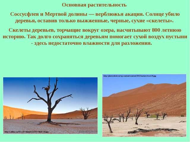Основная растительность Соссусфлея и Мертвой долины — верблюжья акация. Солнц...