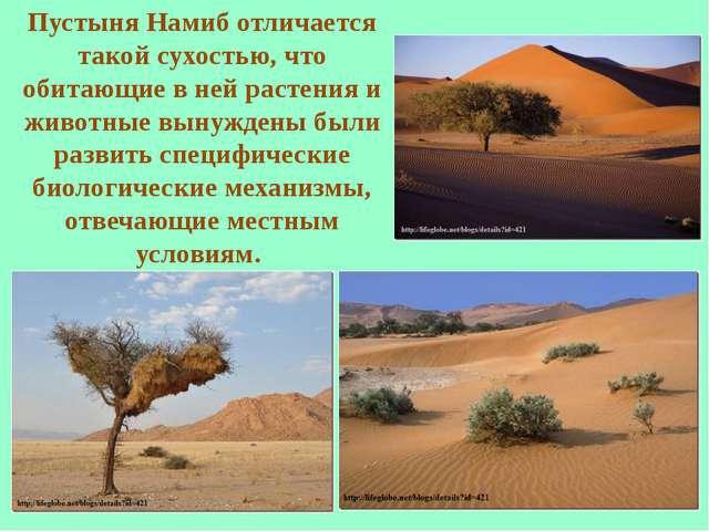 Пустыня Намиб отличается такой сухостью, что обитающие в ней растения и живот...
