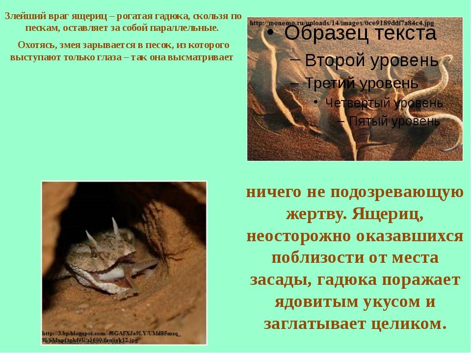 Злейший враг ящериц – рогатая гадюка, скользя по пескам, оставляет за собой п...