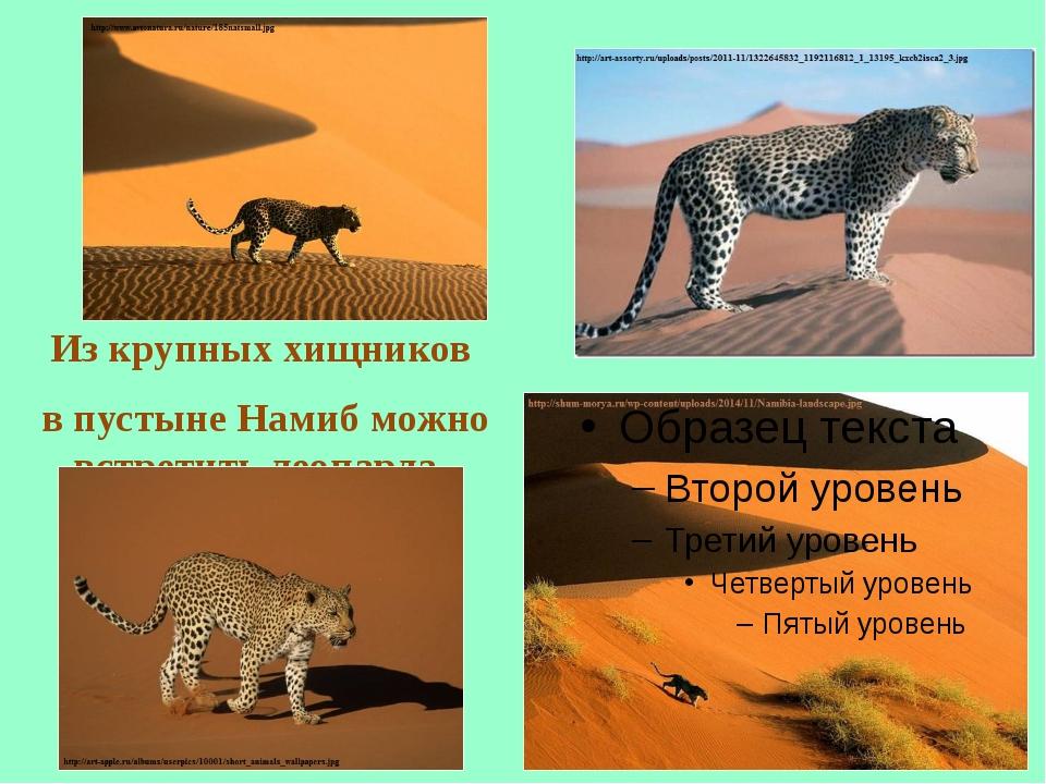 Из крупных хищников в пустыне Намиб можно встретить леопарда.