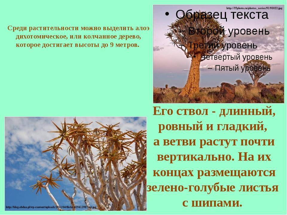 Среди растительности можно выделить алоэ дихотомическое, или колчанное дерево...