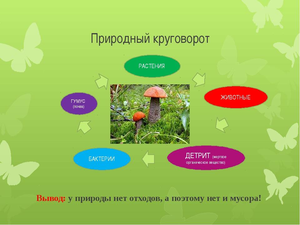 Природный круговорот Вывод: у природы нет отходов, а поэтому нет и мусора! ГУ...