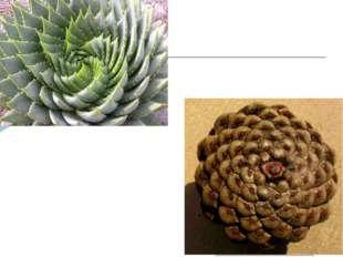 В живой природе можно найти множество примеров логарифмической спирали к соде