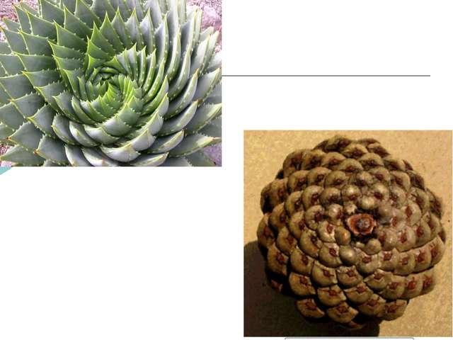 В живой природе можно найти множество примеров логарифмической спирали к соде...