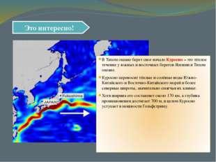 Это интересно! В Тихом океане берет свое начало Куросио – это тёплое течение
