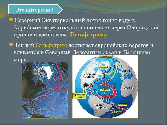 Северный Экваториальный поток гонит воду в Карибское море, откуда она вытекае...