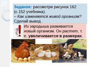 Задание: рассмотри рисунок 162 (с.152 учебника). – Как изменяется живой орган
