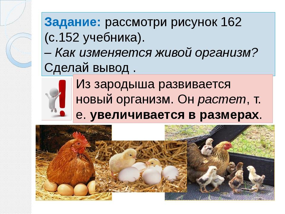 Задание: рассмотри рисунок 162 (с.152 учебника). – Как изменяется живой орган...