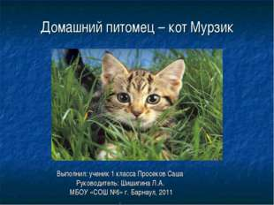 Домашний питомец – кот Мурзик Выполнил: ученик 1 класса Просеков Саша Руковод