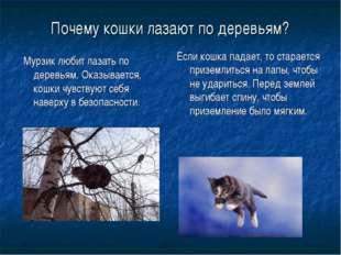 Почему кошки лазают по деревьям? Мурзик любит лазать по деревьям. Оказывается