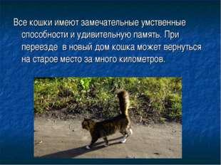 Все кошки имеют замечательные умственные способности и удивительную память. П
