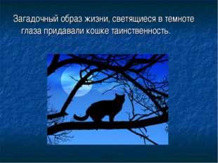 Загадочный образ жизни, светящиеся в темноте глаза придавали кошке таинственн