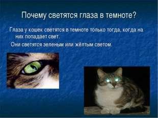 Почему светятся глаза в темноте? Глаза у кошек светятся в темноте только тогд