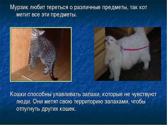 Мурзик любит тереться о различные предметы, так кот метит все эти предметы. К...