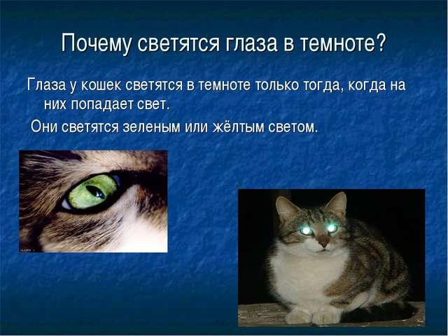 Почему светятся глаза в темноте? Глаза у кошек светятся в темноте только тогд...