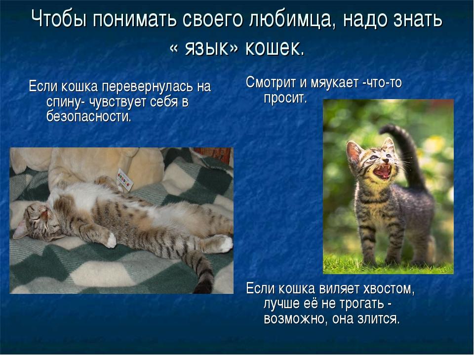 Чтобы понимать своего любимца, надо знать « язык» кошек. Если кошка переверну...