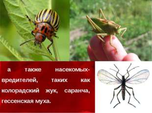 а также насекомых-вредителей, таких как колорадский жук, саранча, гессенская
