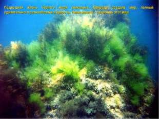 Подводная жизнь Черного моря уникальна. Природа создала мир, полный удивитель