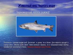 Черноморский лосось (кумжа) Относится к ценным видам рыб. Достигает в длину 1