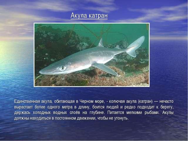 Акула катран Единственная акула, обитающая в Черном море, - колючая акула (ка...