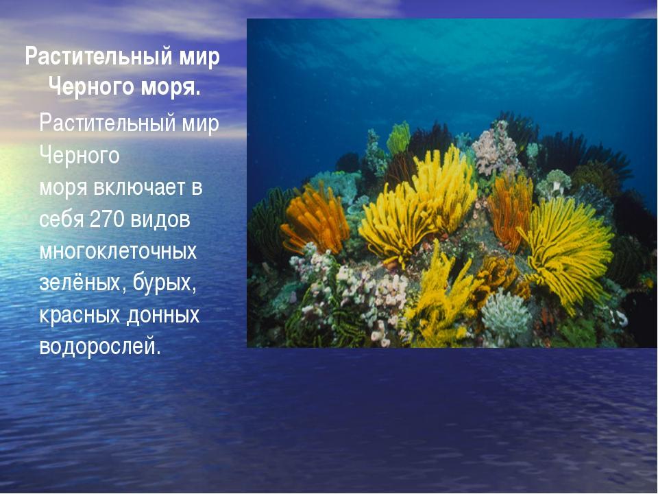 Растительный мир Черного моря. Растительный мир Черного морявключает в себя...